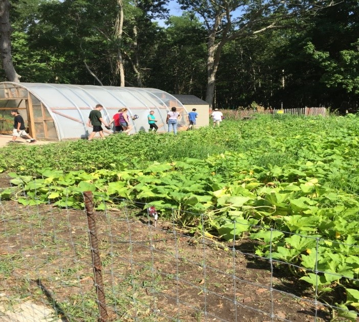 Bellport Students Participate in Farm to Table Program